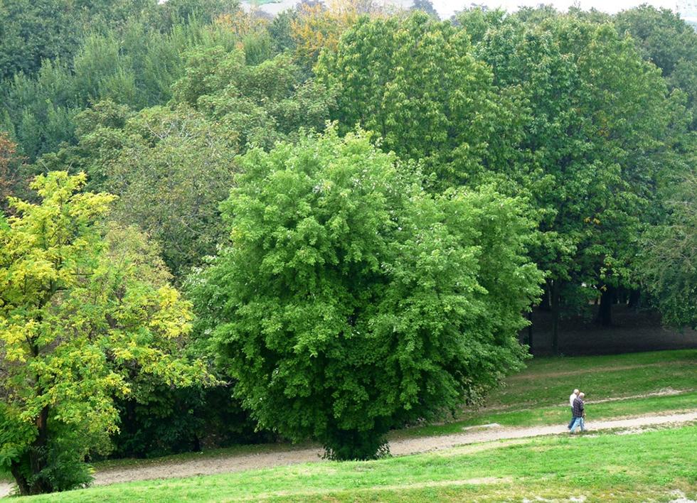 Ufficio parchi e giardini milano - Ufficio parchi e giardini milano ...