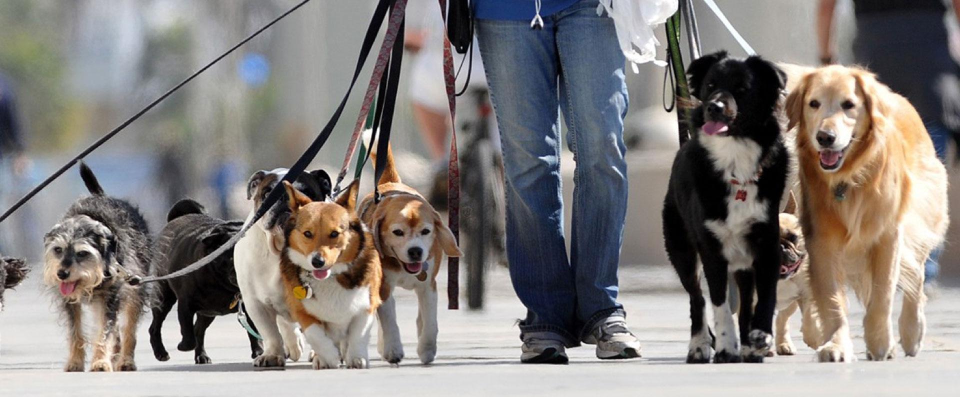 Dog sitter a Milano City Life